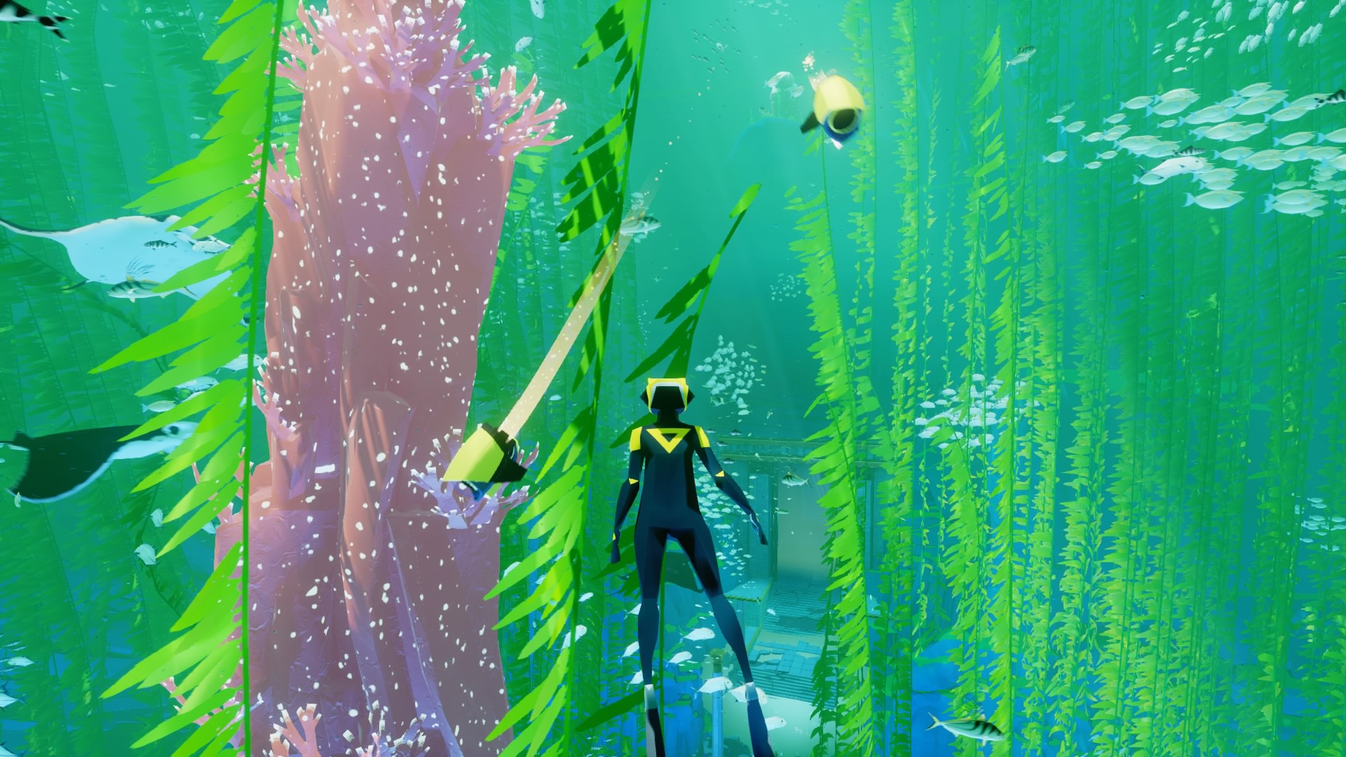 Ahhh, another day with the kelp and the mantas